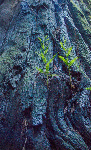 A photo of plants and moss growing from a tree trunk