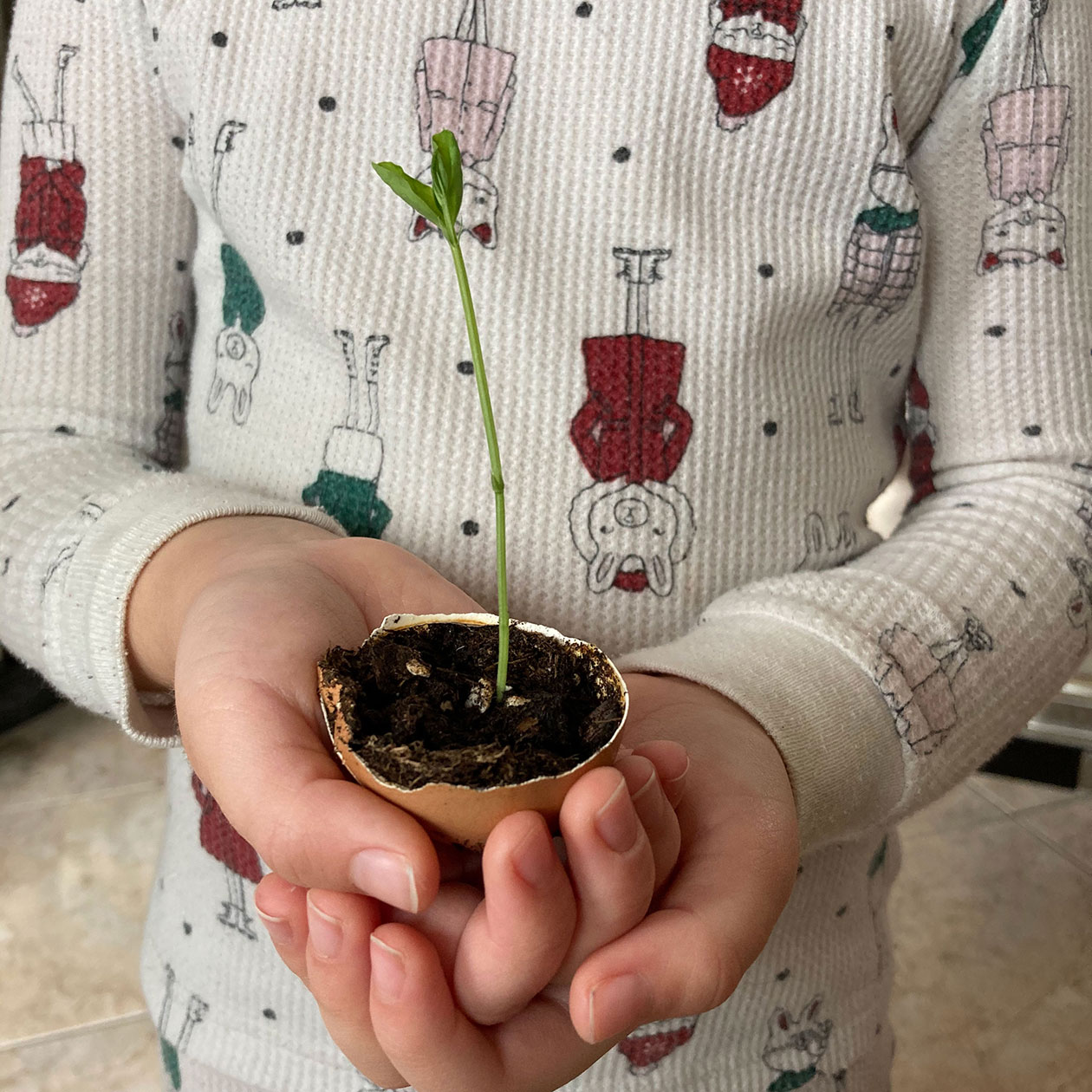 A photo of a person holding a small plant
