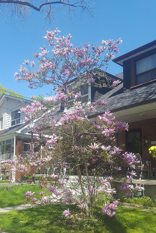 A photo of a tree with pink flowers blooming