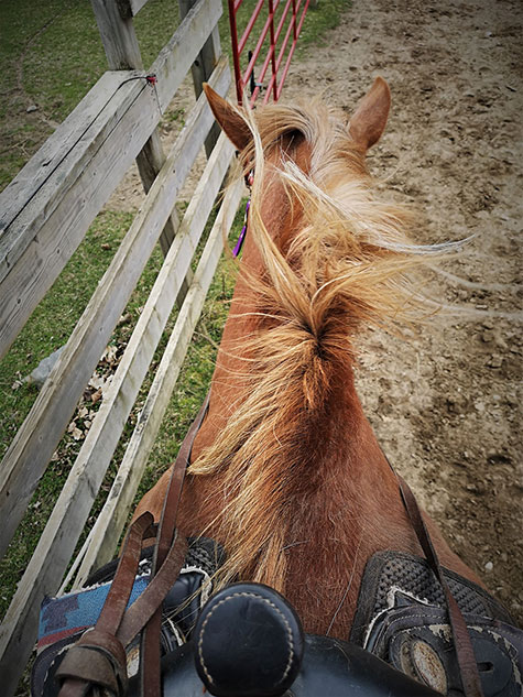 A photo of a horse taken from the view of a horseback rider
