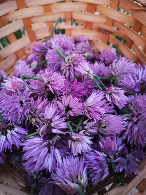A photo of flowers in a basket