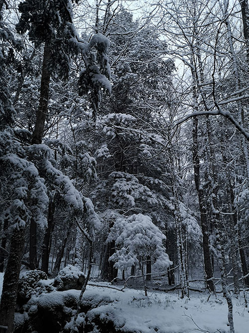 A photo of snow-covered trees