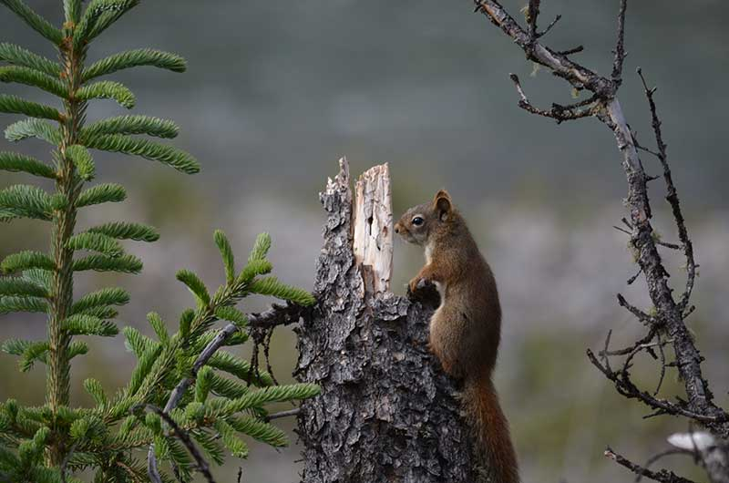 Photo of a squirrel standing by a tree and a branch