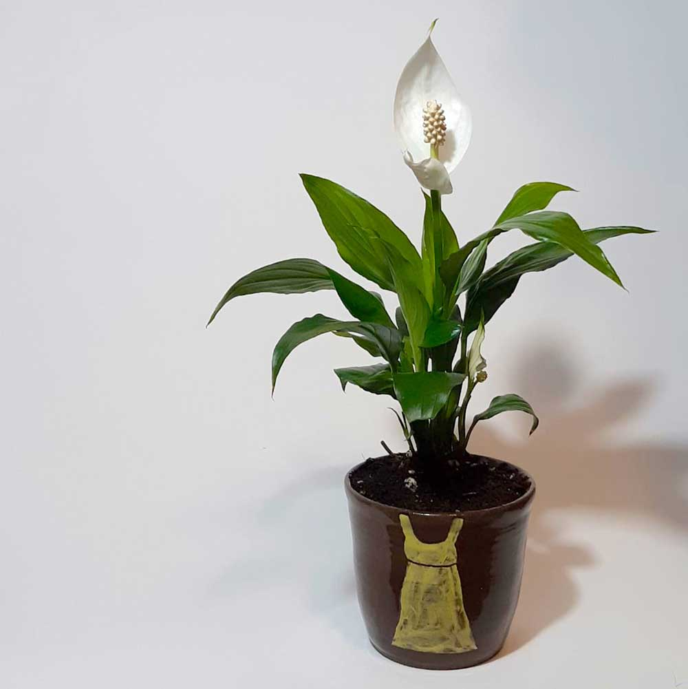 A clay planting pot off-centred to the right, placed on a white background. The pot is an earthy brown colour decorated with a yellow painted dress at the front. Inside the pot is a white peace lily that stands upright with its leaves spread outwards, away from the stem.